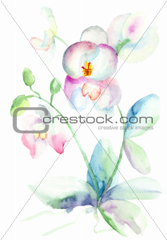 Beautiful orchid, watercolor illustration