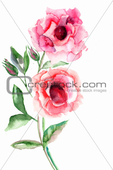 Beautiful Roses flowers