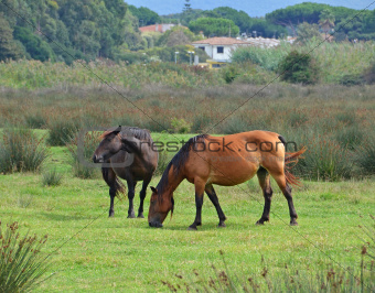 horses pasturing in green meadow