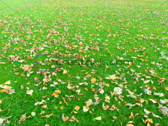 'Autumn leaves on a green grass'