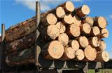 Logging Load