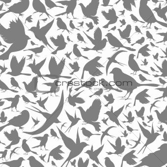 Background of birds3