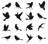 Silhouette of birds2