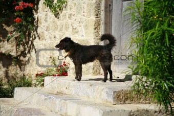 Cute black dog