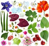 Set of plant elements - flowers and leaves. 