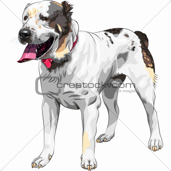 vector sketch dog Central Asian Shepherd Dog breed