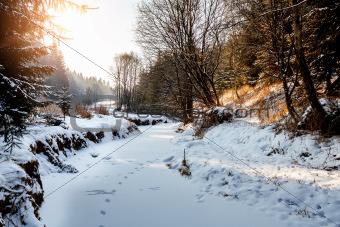 Sunny morning in winter landscape