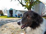 Friendly Farm Dog