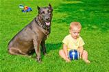 A child plays with a dog and ball on a grass