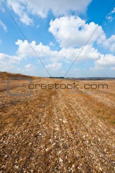 Stony Soil