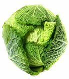 Savoy cabbage head with water drops