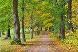 Finland, Hameenlinna. Park Aulanko in autumn