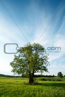 Tree in a meadow
