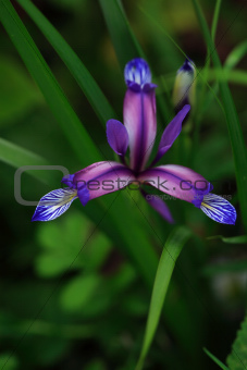 Beautiful Wildflower