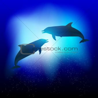 Vetor Dolphins