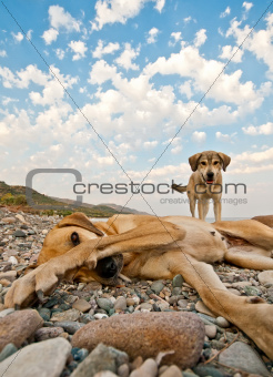 Playful Dogs On The Beach