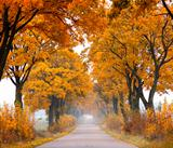 Fall road.
