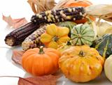 Mini Pumpkins And Indian Corn