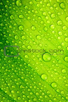 Green leaf with drops of water