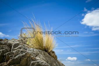 stone grass blue sky