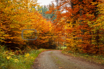 autumn road in forrest