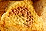Honeycomb pieces in bright sunlight