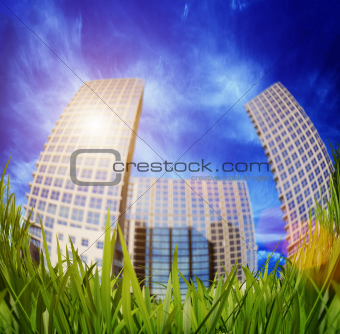 grass and skyscrapers