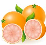 grapefruit vector illustration