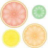 set of citrus in the slice orange lemon lime grapefruit