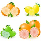 set of citrus orange lemon lime grapefruit vector illustration