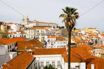 ancient city of Lisbon, palm tree
