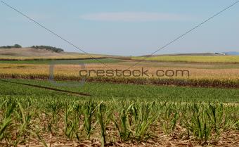 Australian sugar industry sugarcane farm agriculture landscape