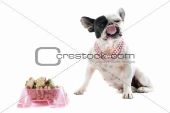 french bulldog and pet food
