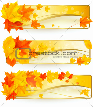 Three autumn banners with colorful leaves in golden frames.  leaves