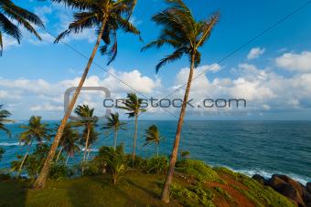 Nature Landscape Ocean Horizon Mirissa Sri Lanka