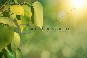 Green autumn background with shallow focus