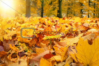 autumn colors with sun light in park