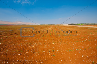 Field in Israel