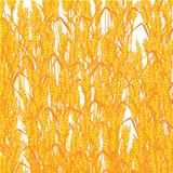 Wheat summer background