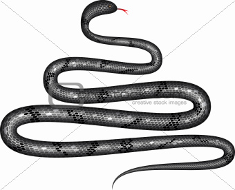 Black shiny snake