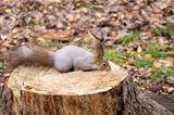 squirrel on a stump