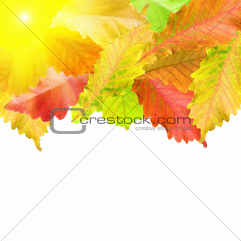 Autumn leaves frame over white for your text