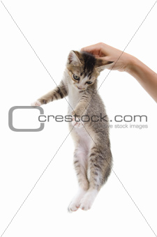 small kitten on a hand