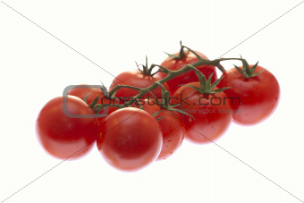 a branch of tomatoes on white background