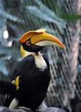 A Portrait of a Hornbill