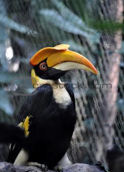 A Portrait of a Hornbill
