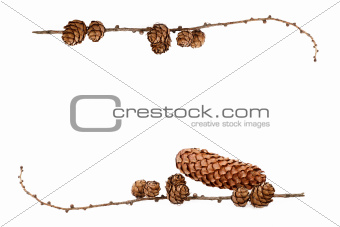 simple natural frame with pine cones