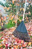 Raking Fall Leaves in Garden Vertical