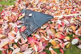 Garden Rake on Fallen Leaves