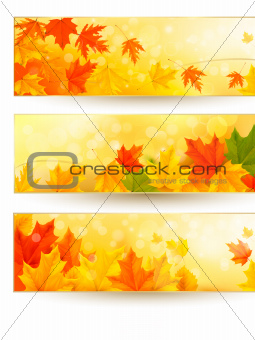 Three autumn banners with colorful leaves in golden frames